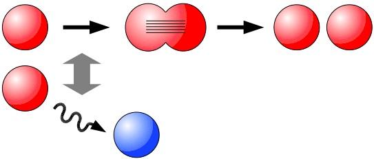spermatogenesis thesis Genetic causes and treatment of spermatogenic failure bita nickkholgh phd thesis spermatogenesis is unaffected but the haploid spermatozoa simply do.